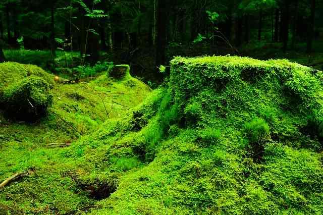 La symbiose, mariage réussi chez les plantes et les animaux