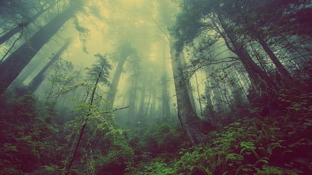 Ives Etienne-Les plantes ont leur intelligence