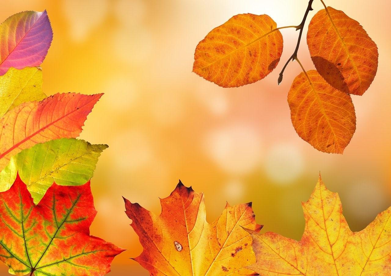 Arrêt de la photosynthèse en automne